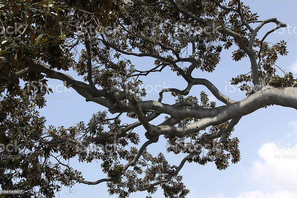 Abstract Tree Branches royalty-free stock photo