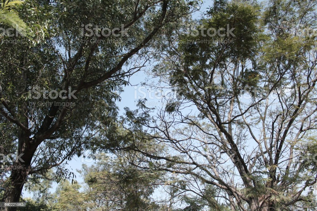 abstract tree foreground with sky background stock photo