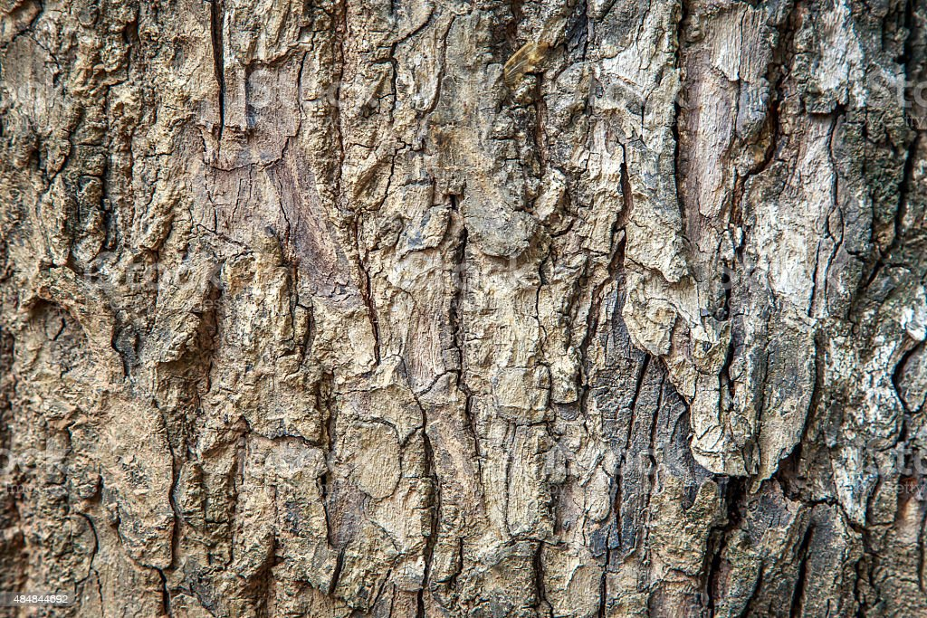 abstract tree peel rustic texture background stock photo