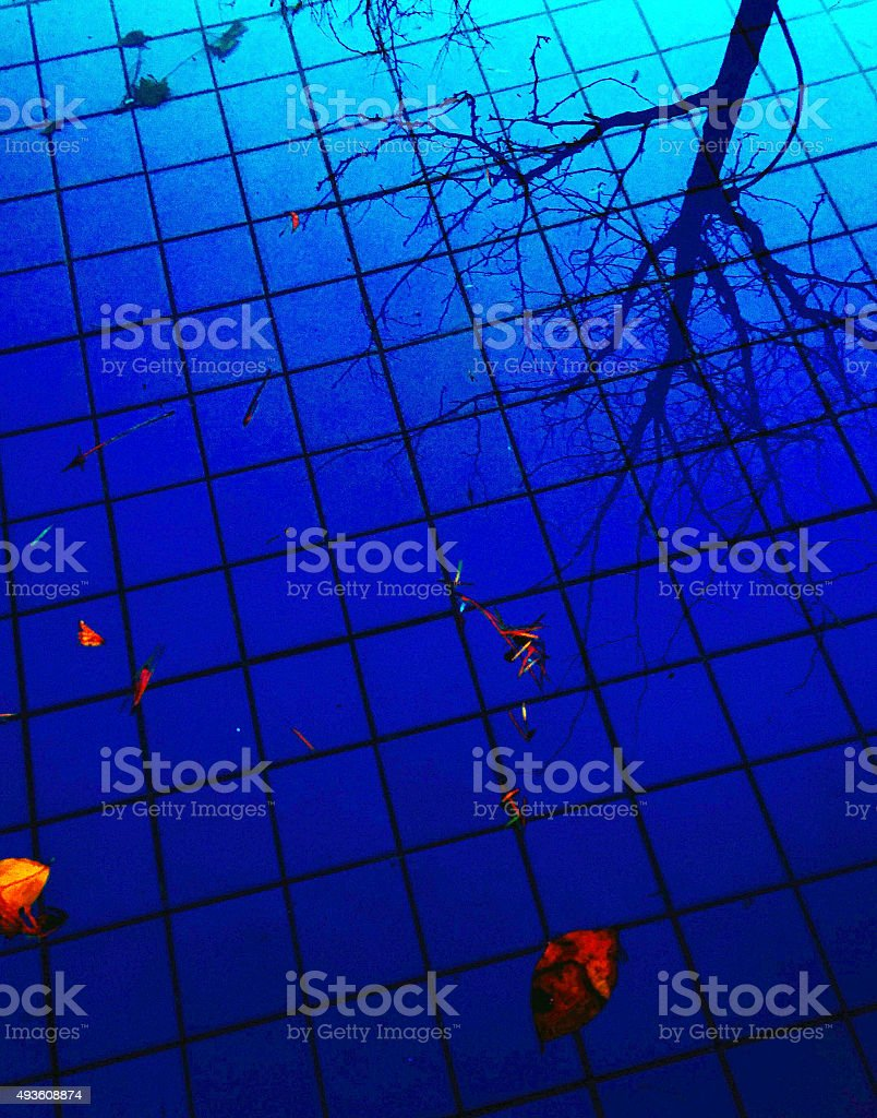 Abstract tree reflection in a city fountain floor royalty-free stock photo