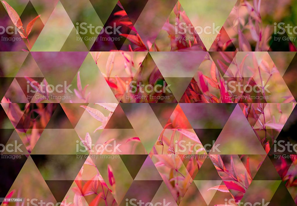 Abstract triangle shaped background: Multicolored plant leaves stock photo
