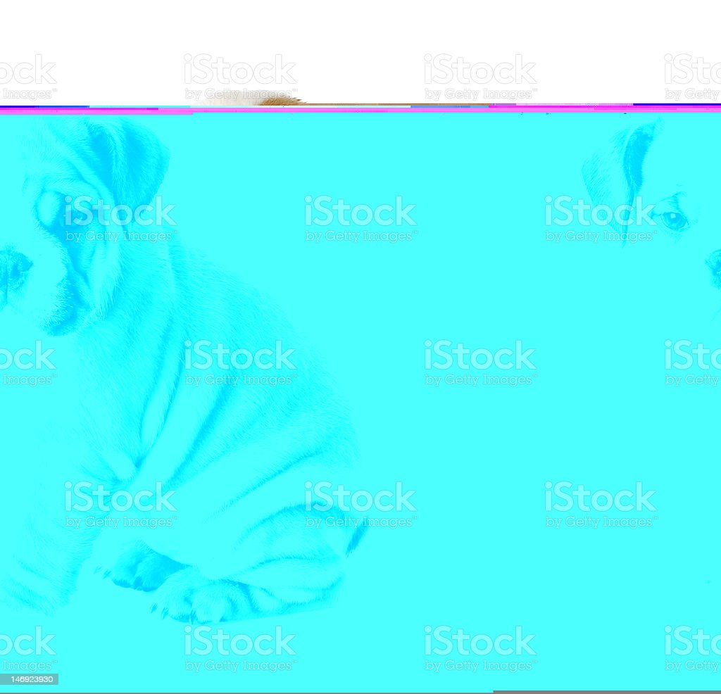 Abstract turquoise image of a bulldog puppy sitting stock photo