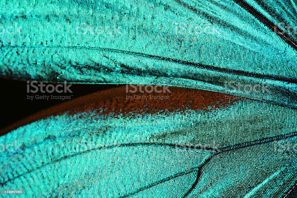 Abstract turquoise texture of shiny butterfly wings stock photo