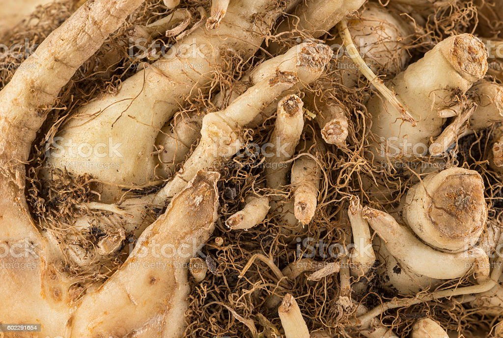 Abstract vegetable Roots stock photo