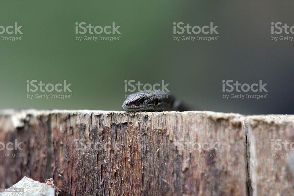 abstract view of a lizard royalty-free stock photo