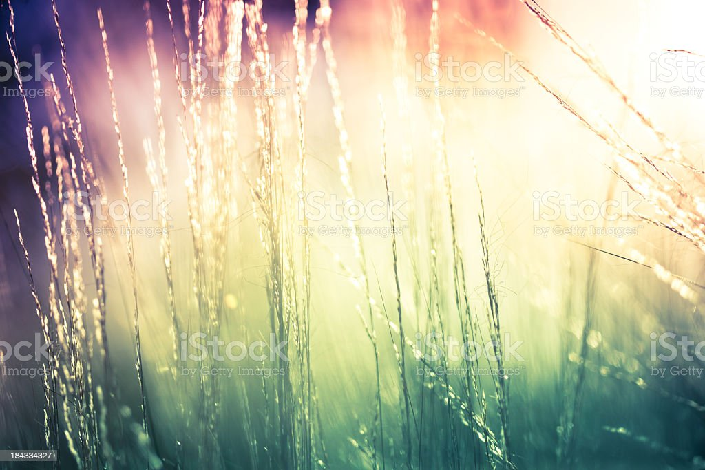 Abstract wallpaper image of some beautiful nature royalty-free stock photo