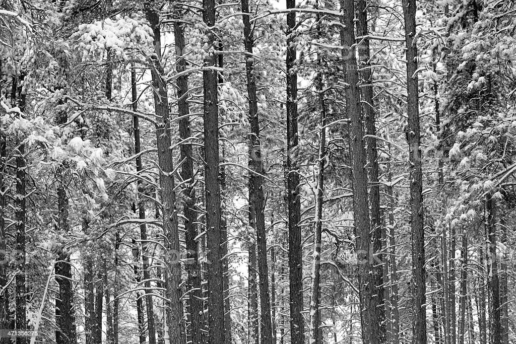 abstract winter forest landscape black and white stock photo