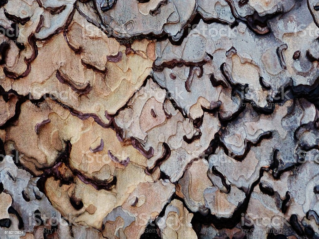 Abstract Wood Pine Tree Bark Natural Pattern Background stock photo