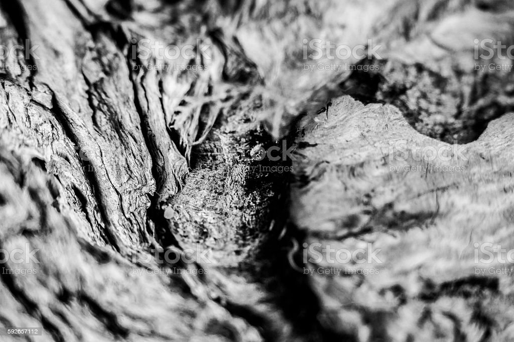abstract woody ,tree wood middle down , close up ,B&W stock photo