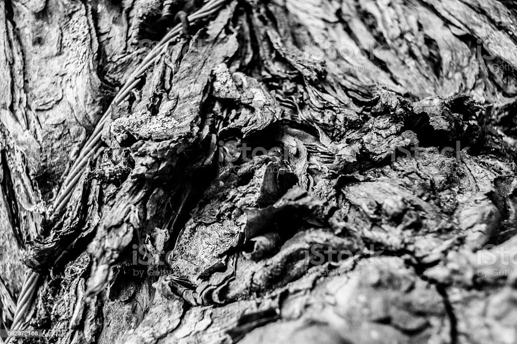 abstract woody,tree wood part iron , close up,B&W stock photo