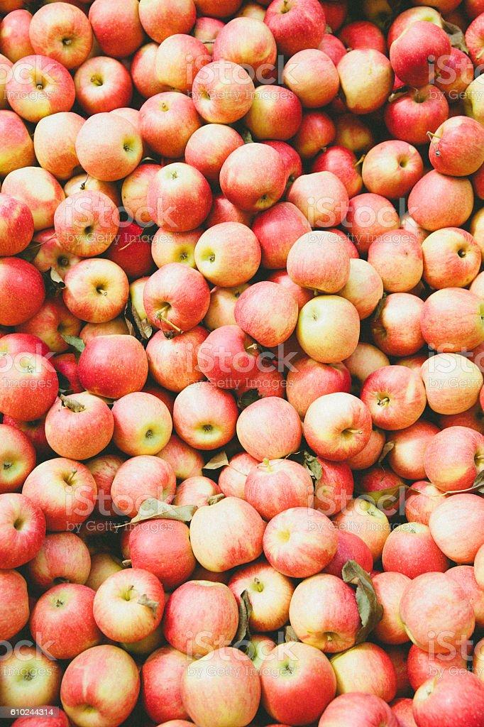 Abundance of Apples stock photo