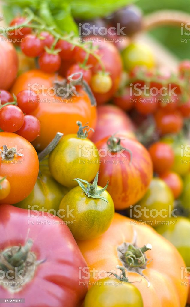 Abundance of Homegrown Heirloom Tomatoes royalty-free stock photo