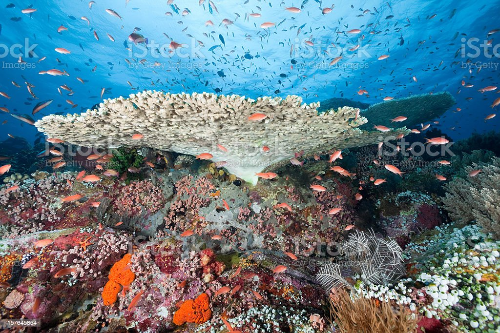 Abundance of Life, Sea Mountain in Komodo National Park, Indonesia stock photo