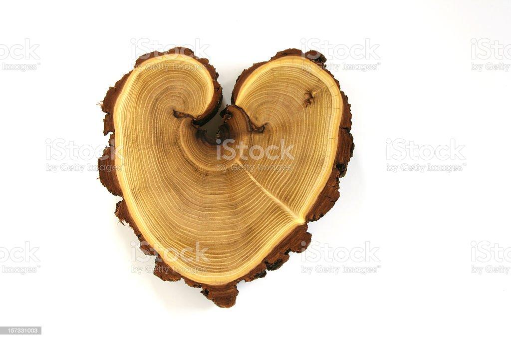 acacia heart stock photo