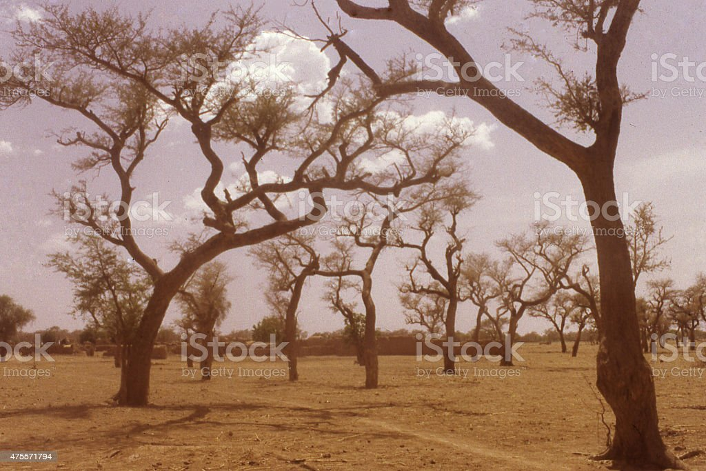 Acacia trees Agricultural fields village Sahel Burkina Faso West Africa stock photo