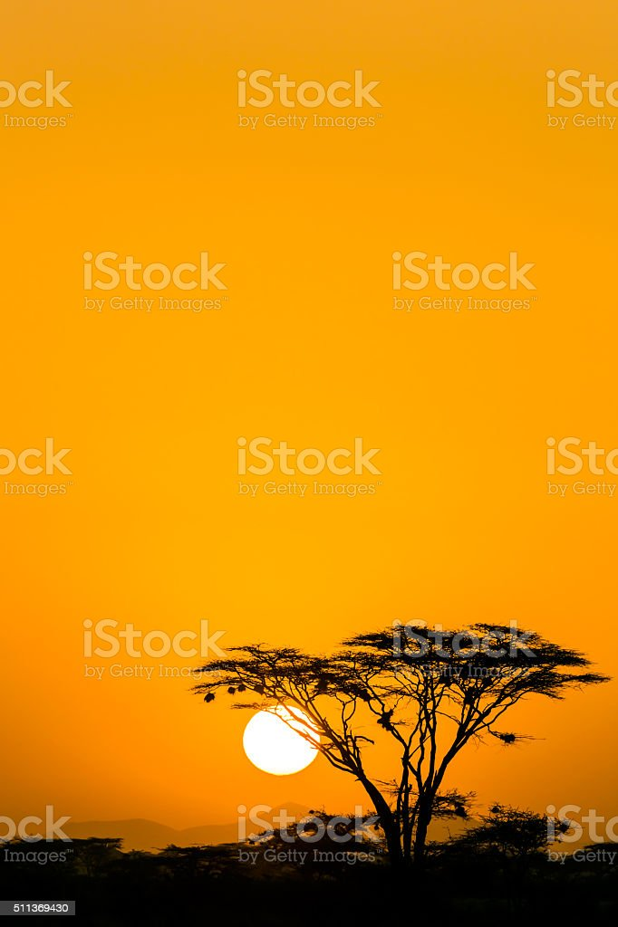 Acacia trees at Dramatic Sunrise stock photo