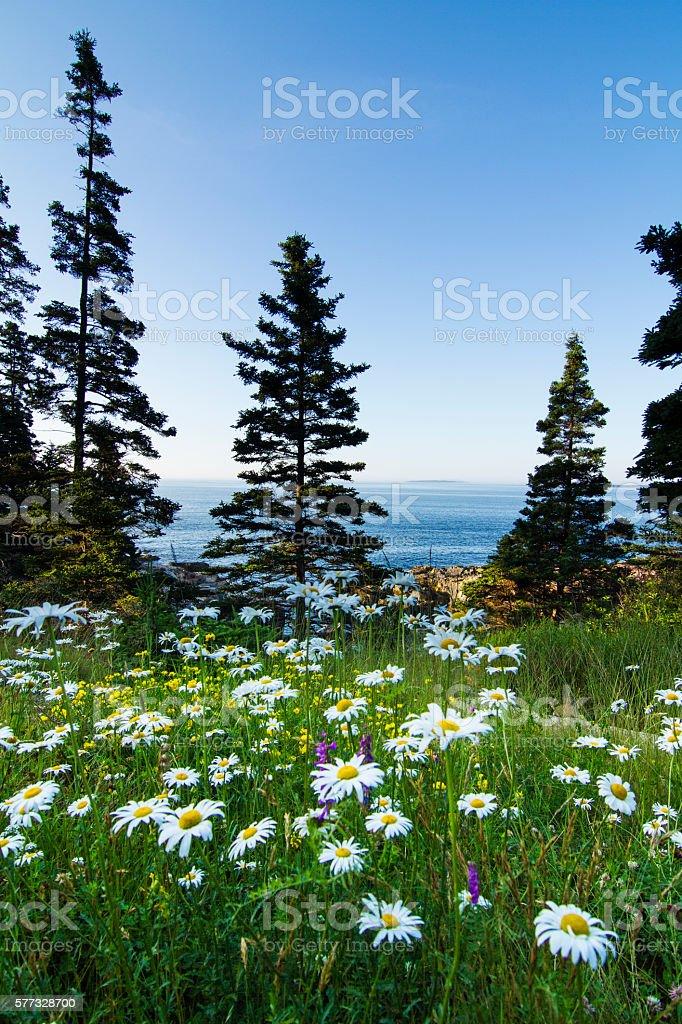 Acadia landscape stock photo