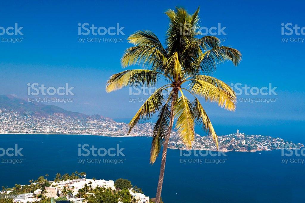 Acapulco Palm Tree stock photo