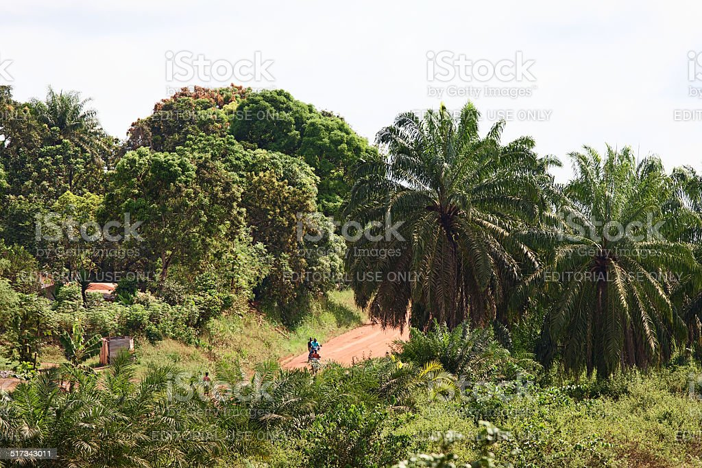Access, jungle road from Monrovia to Gbarnga stock photo