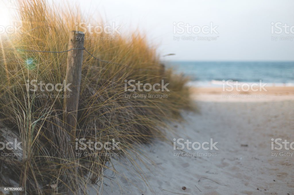 access to the beach with fence and dry grass stock photo
