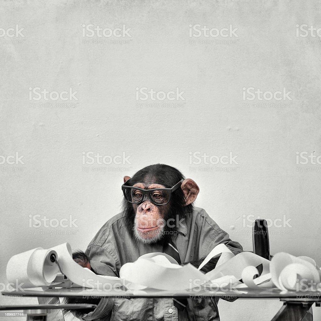 Accountant Goofy Chimp stock photo