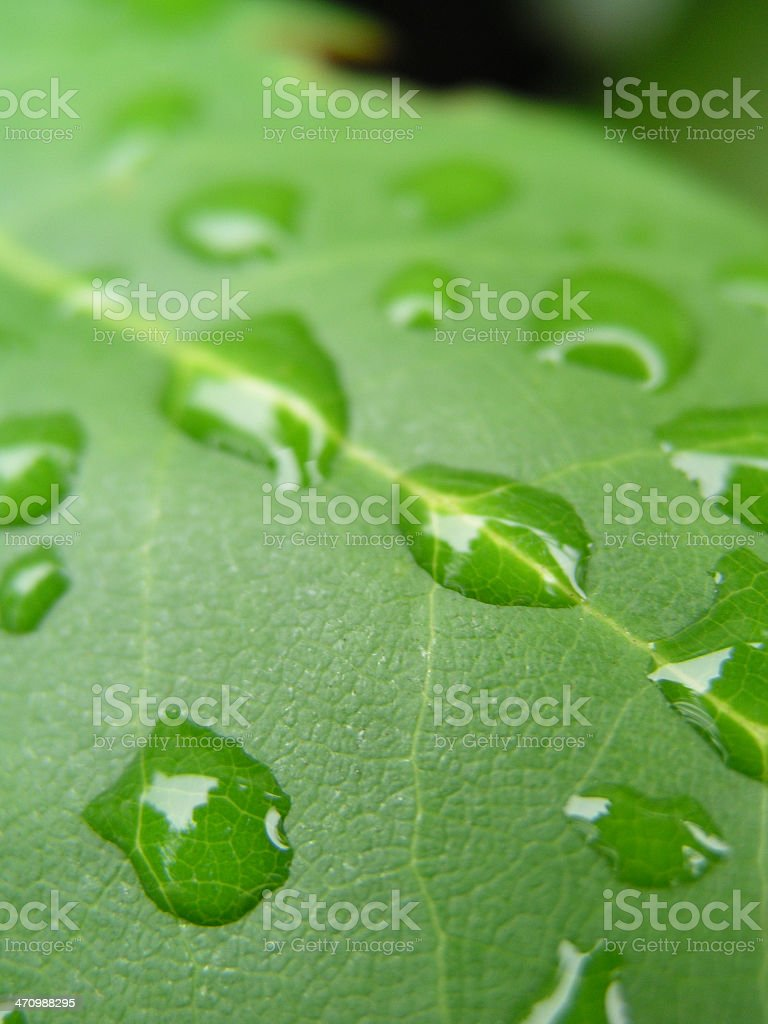 Accumulated Drops royalty-free stock photo