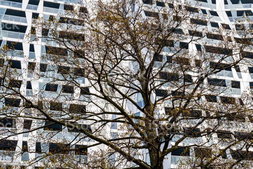 Achitectural Building Tree Rotterdam stock photo