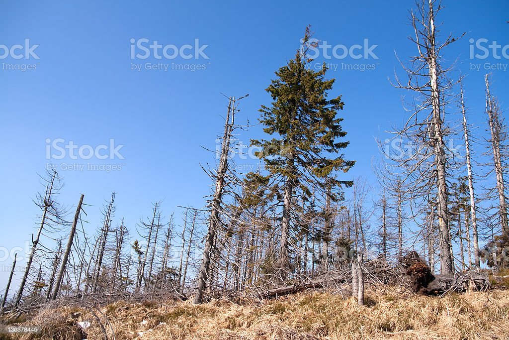 Acid rain forest stock photo