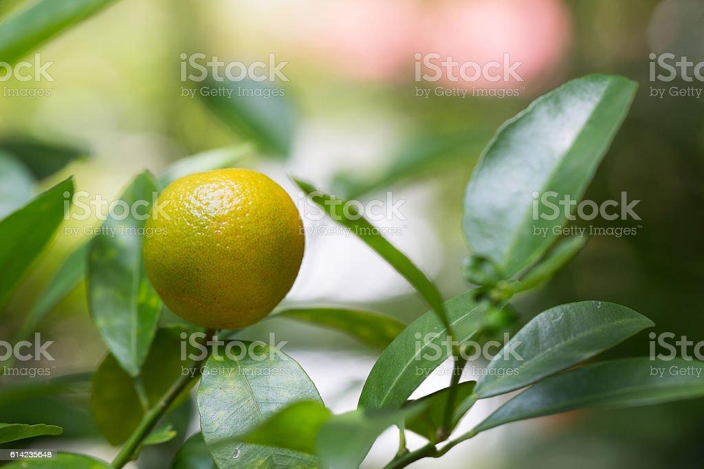 Acidless Orange stock photo