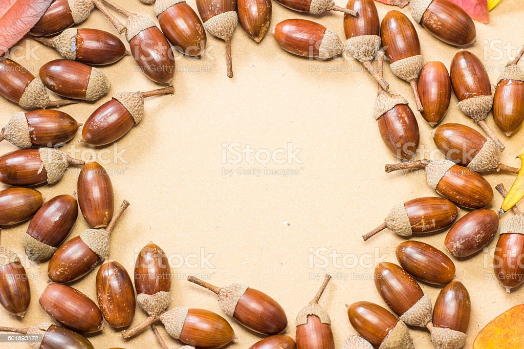Acorn and autumn leaf frame in circle stock photo