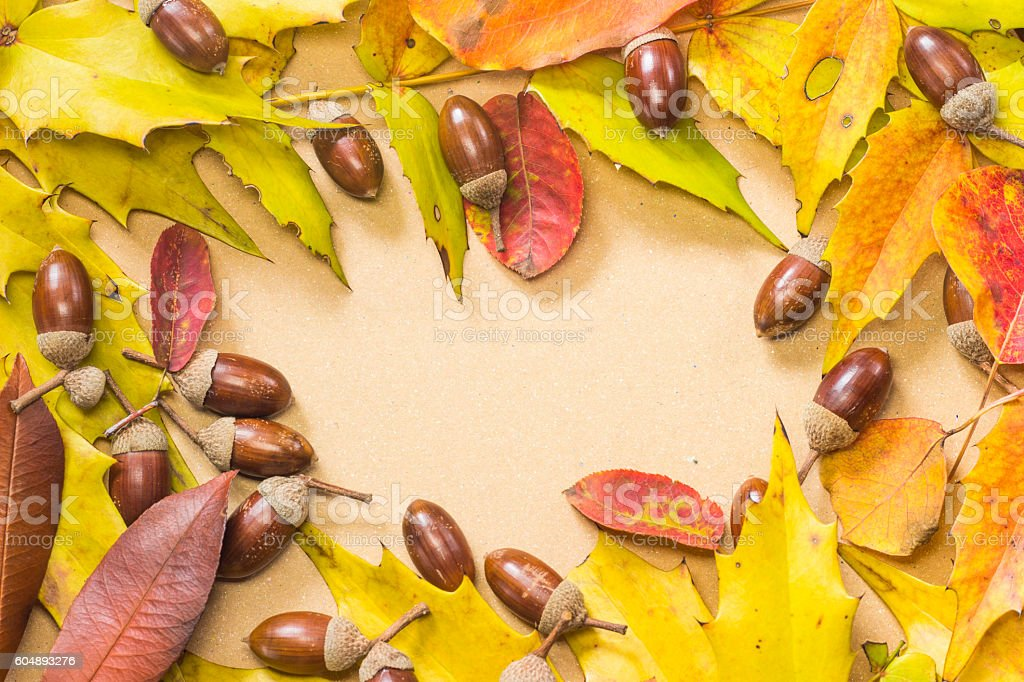 Acorn and autumn leaf frame stock photo