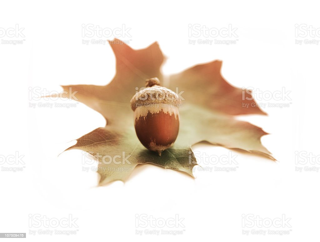 Acorn and Oak Leaf royalty-free stock photo