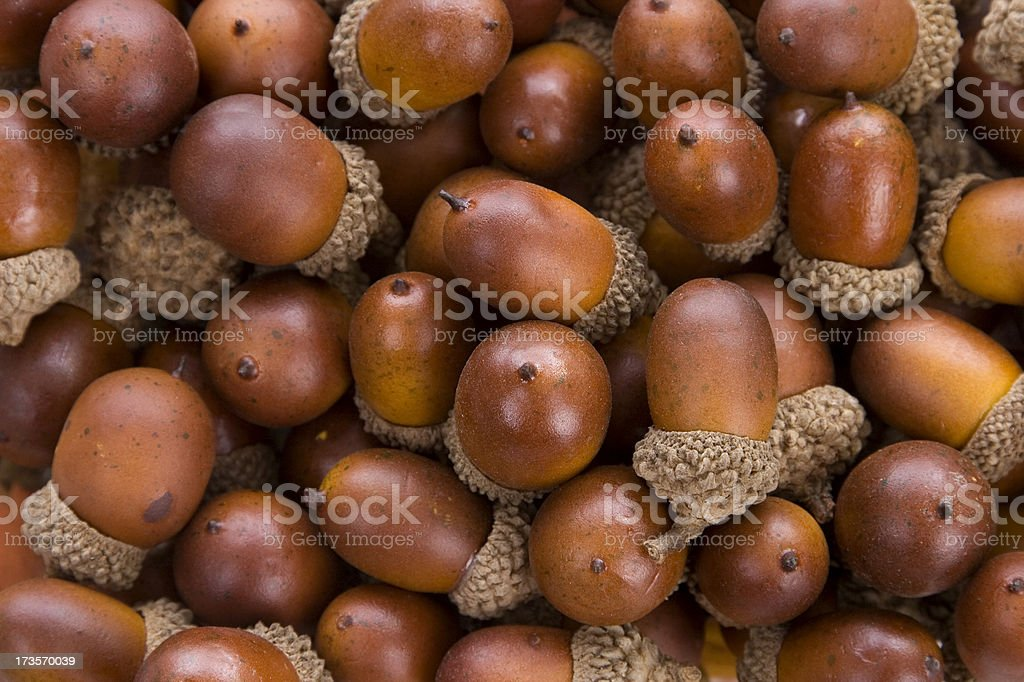 acorn background stock photo