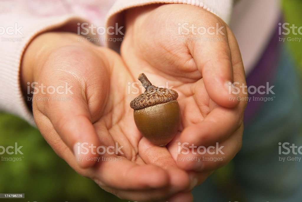 Acorn Found! stock photo