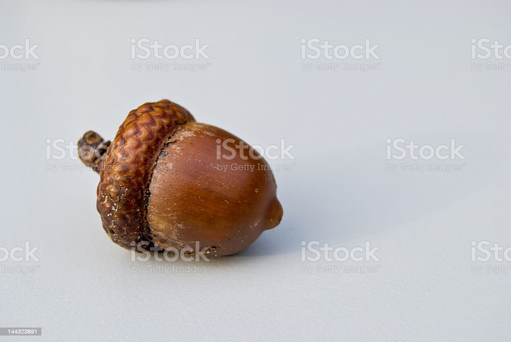 Acorn Isolated On White royalty-free stock photo