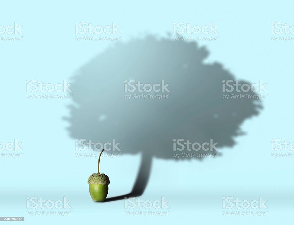 Acorn with oak tree shadow stock photo