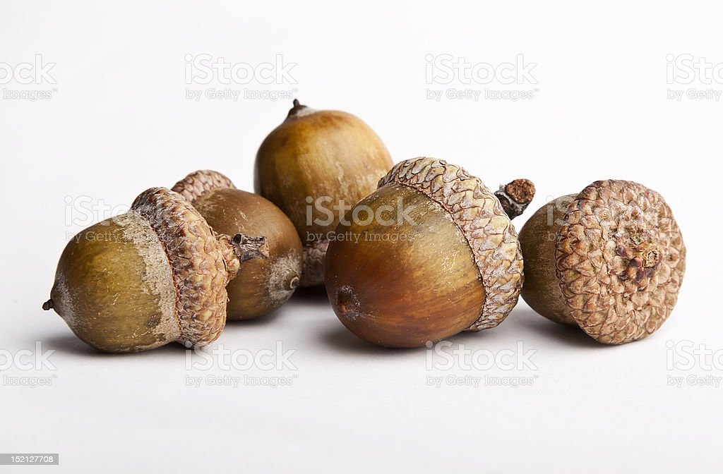 Acorns isolated on a white background stock photo