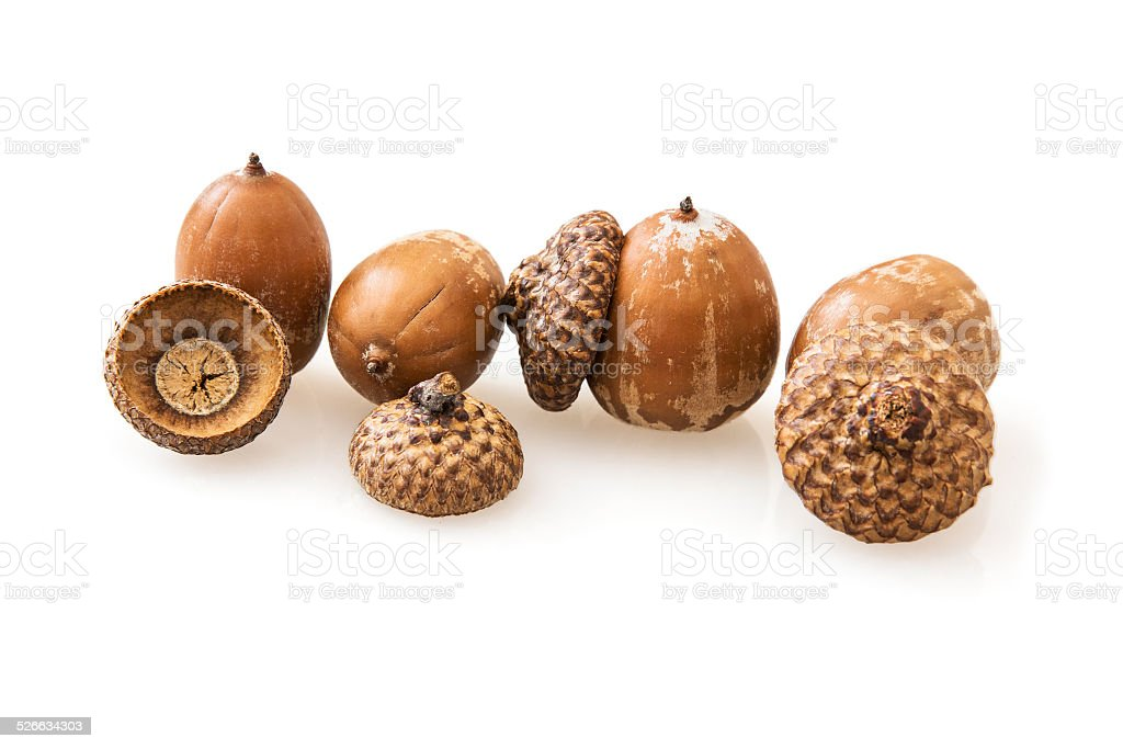 Acorns on a white background stock photo