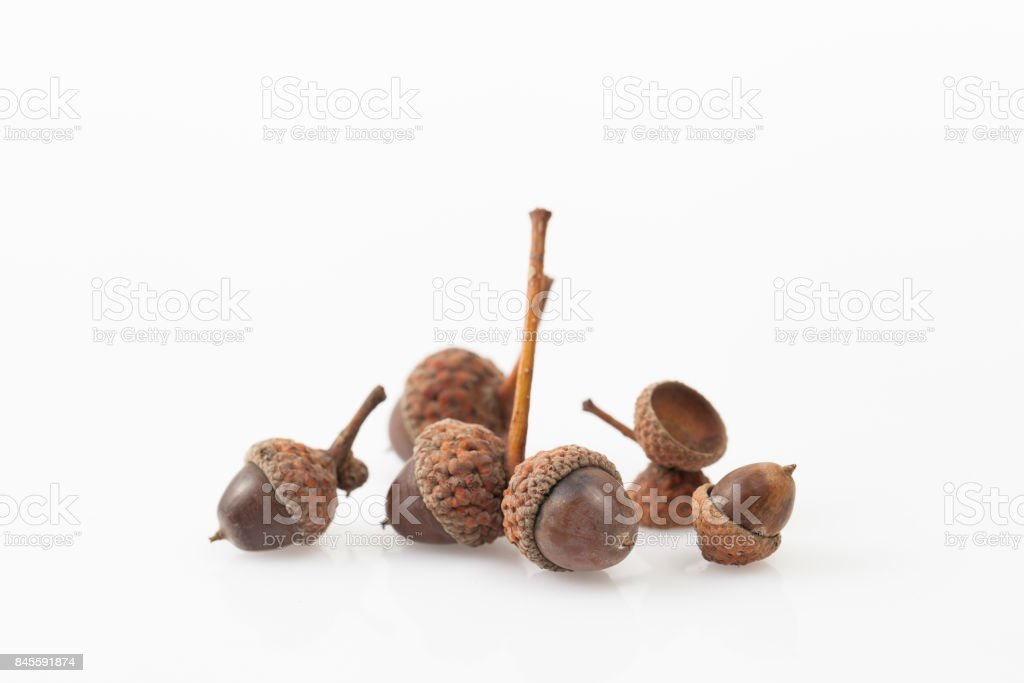 Acorns on a white background. Place for text. stock photo