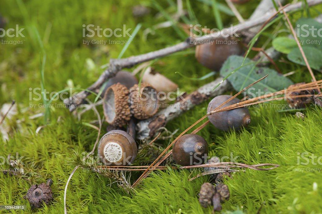 Nozes no chão da floresta foto royalty-free