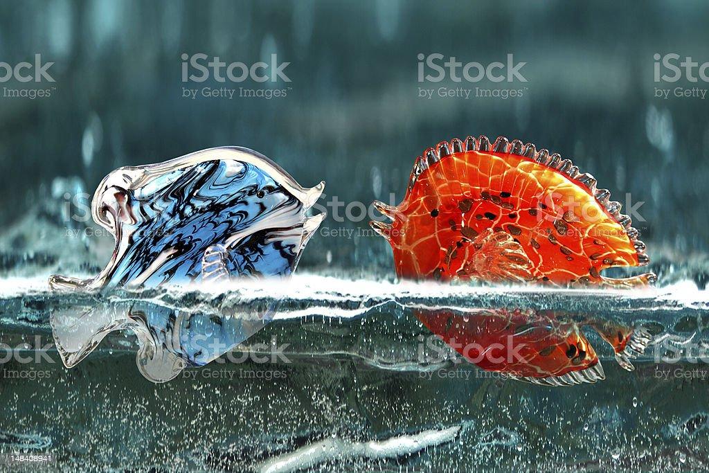 acquario tropicale stock photo