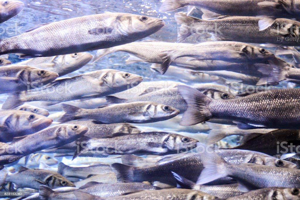 Acquarium Full of Beautiful Tropical Fishes stock photo