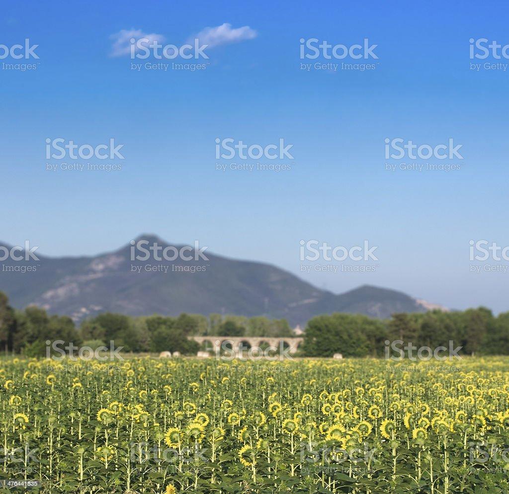 L'acquedotto di Asciano con girasoli - Sunflowers and mountains stock photo