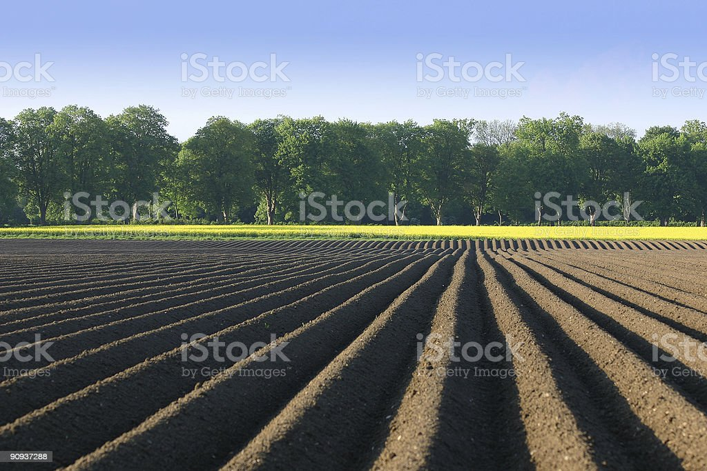 Acre and rape royalty-free stock photo