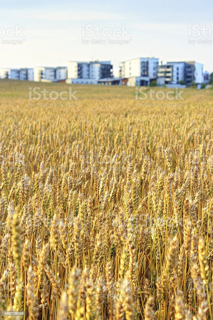 Acriculture in city royalty-free stock photo