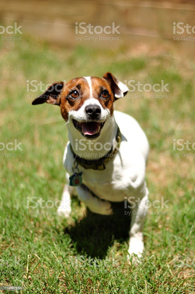 Action Dog stock photo