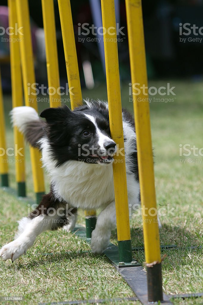 Action royalty-free stock photo