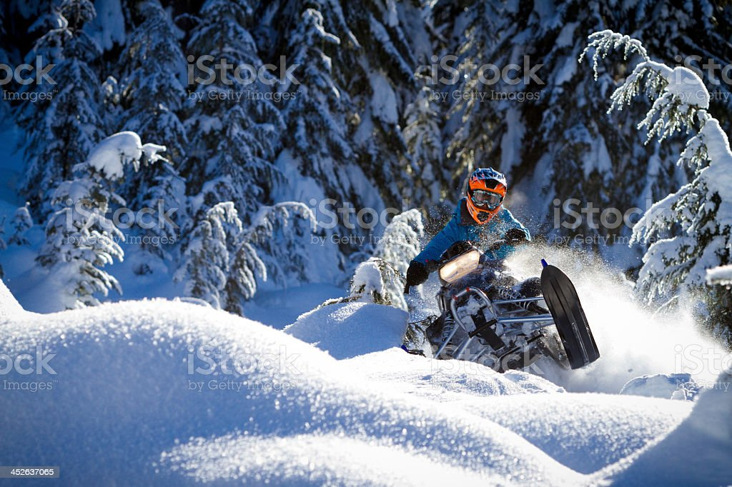 Action shot of snowmobiler riding down slope with pine trees stock photo