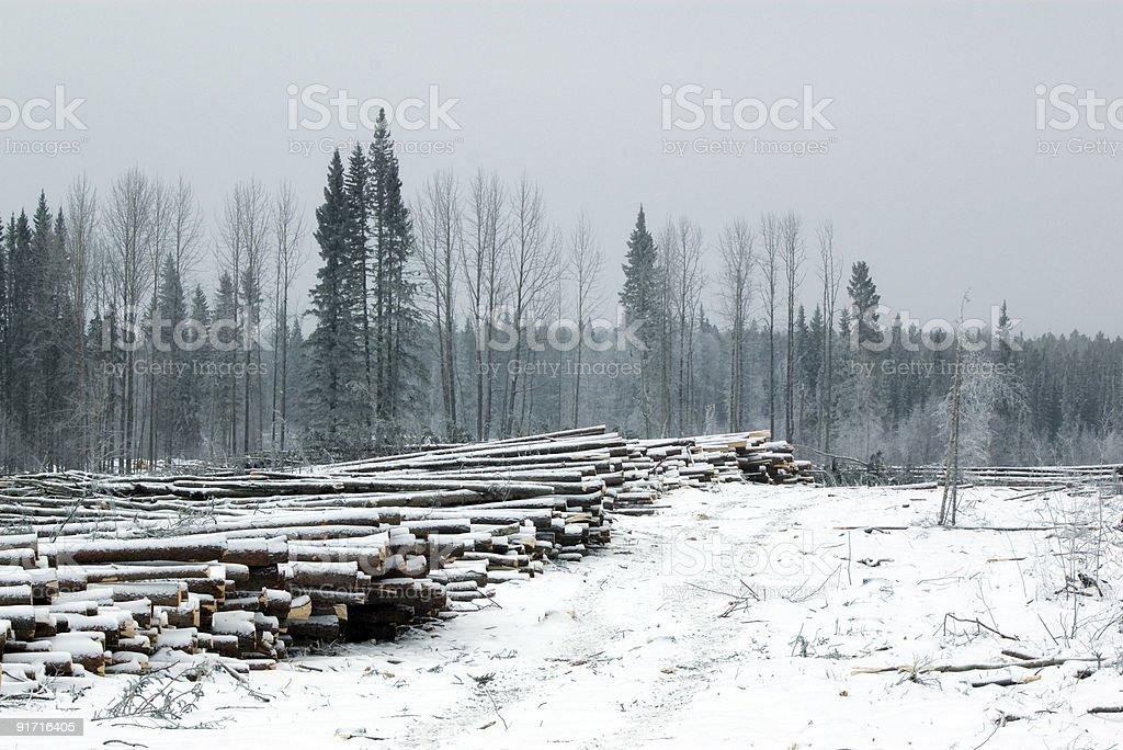 Active Logging road in cutblock stock photo