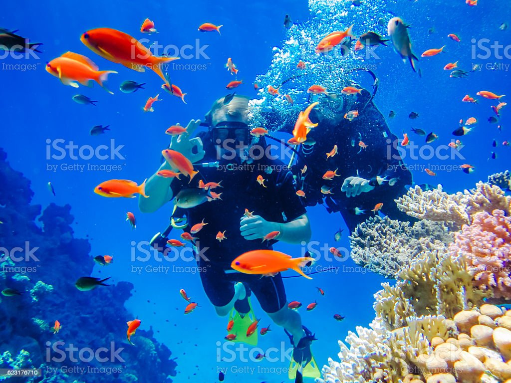 Active rest. Diving at the coral reefs stock photo
